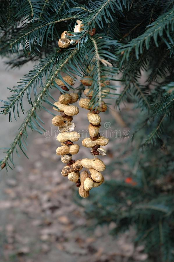 Рождественская елка для животных - арахисов вися на хвойном дереве стоковое фото
