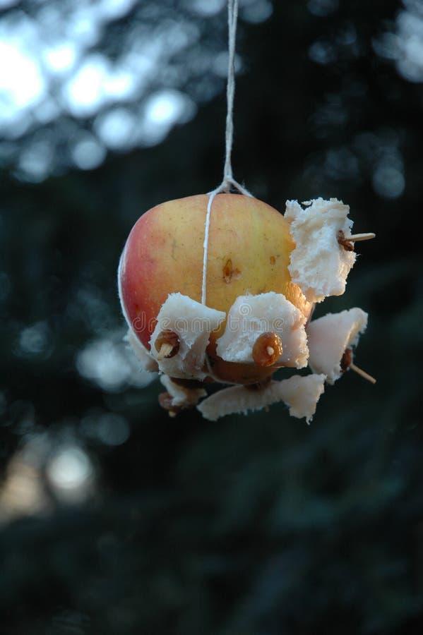 Рождественская елка для животных стоковое изображение rf