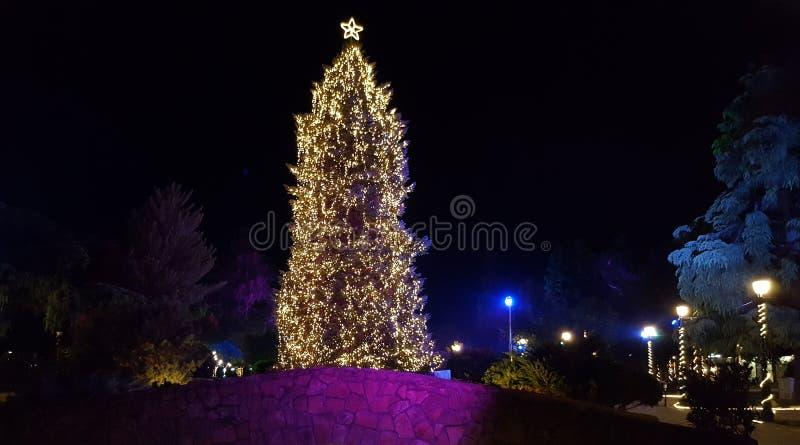 Рождественская елка на парке города в Katerini стоковое фото rf