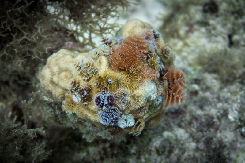 Рождественская елка проникает коралл леса стоковые фото