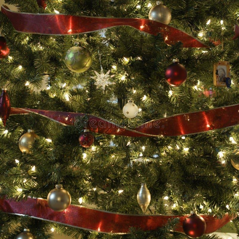 рождественская елка стоковые фотографии rf