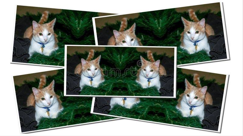 Рождественские открытки дерева меха стоковое изображение