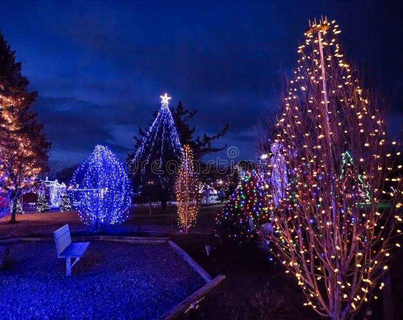 Рождественское дерево Абстрактно с цветными огнями и бенч-сивом стоковое фото
