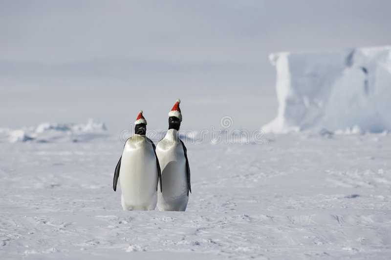 рождество Антарктики стоковое фото rf