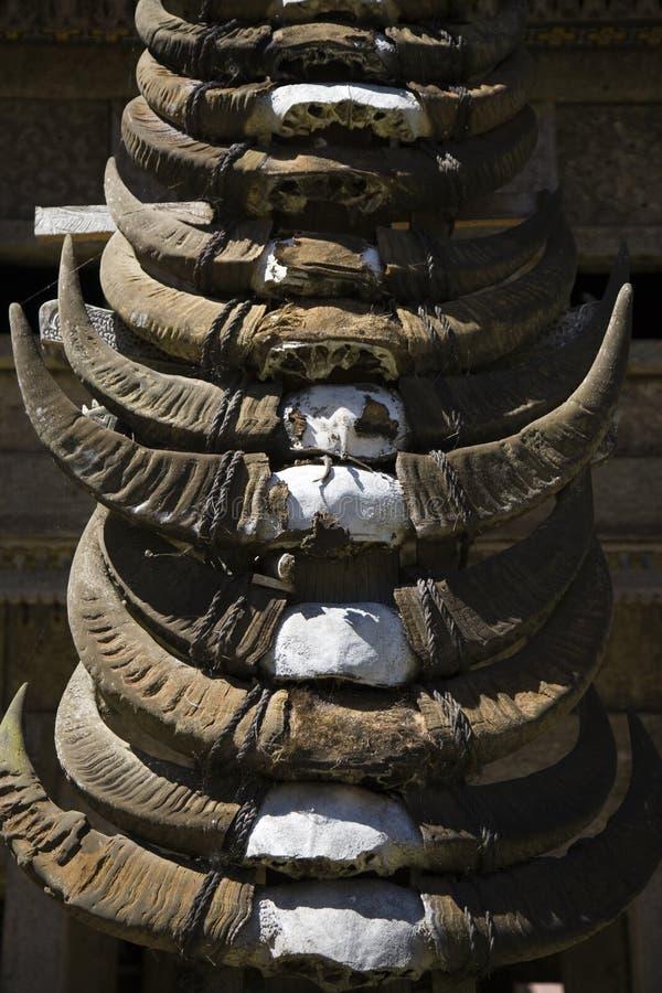 рожочки буйвола стоковое изображение