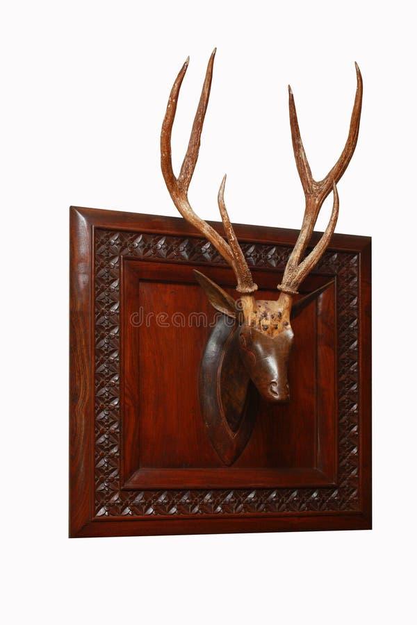 рожочки оленей стоковое изображение rf