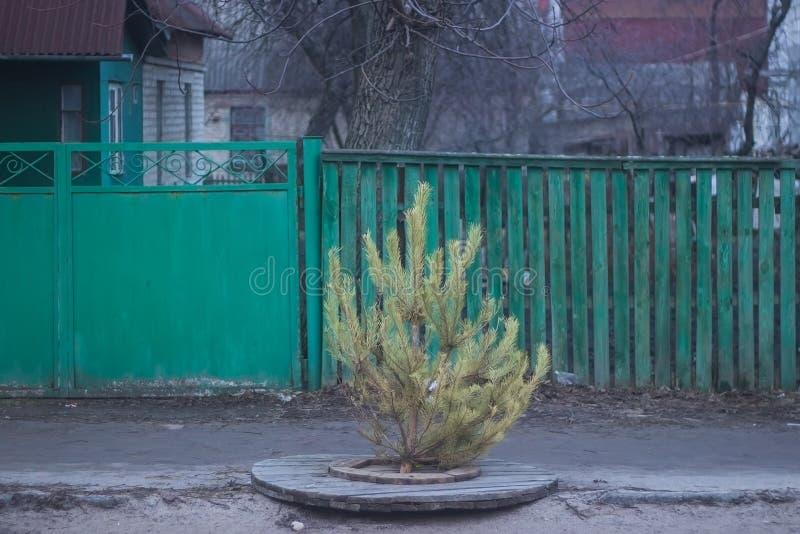 Рождественская елка в сточных трубах стоковое изображение rf