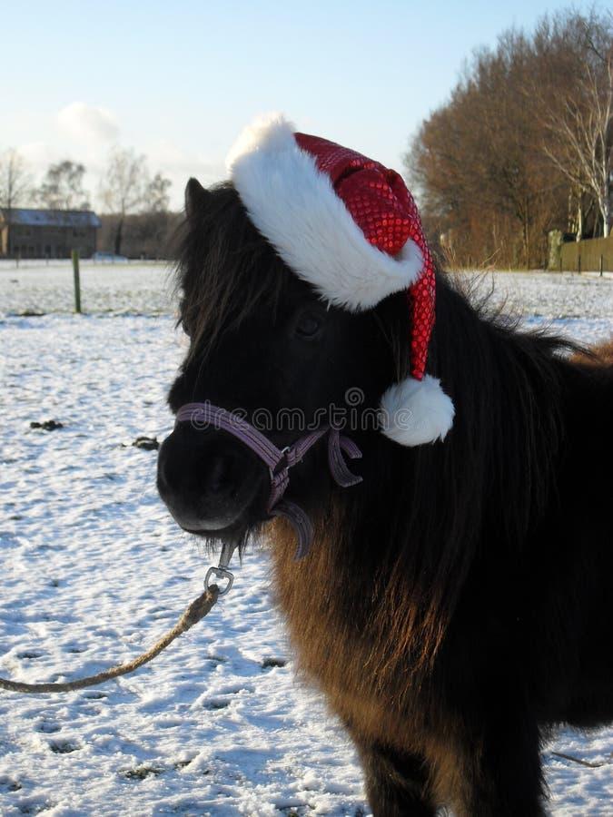 Рождеств-стиль пони Shetland стоковое изображение rf