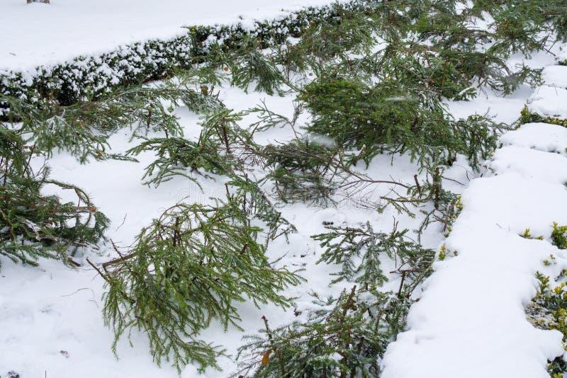 Розарий в парке в зиме стоковые изображения rf