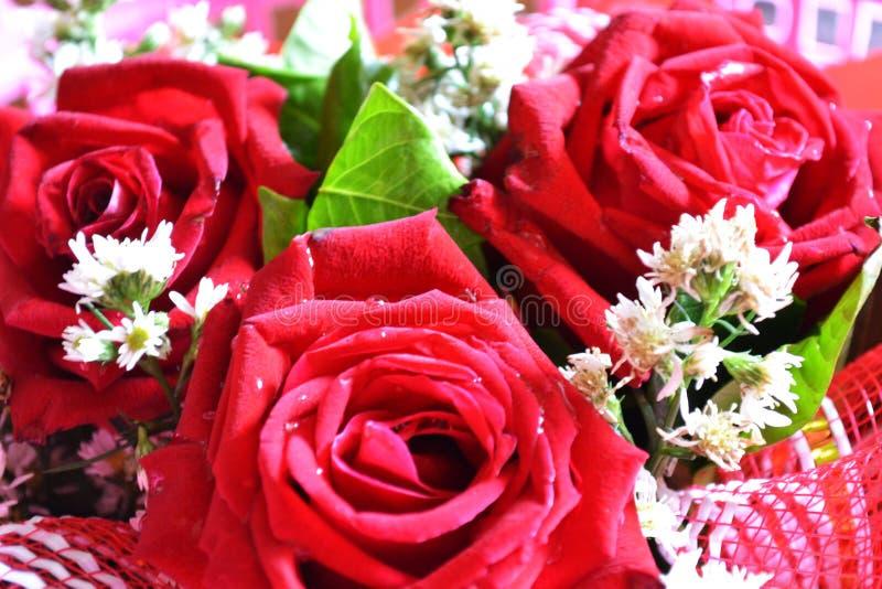 Роза для celebity и для любов стоковые изображения rf