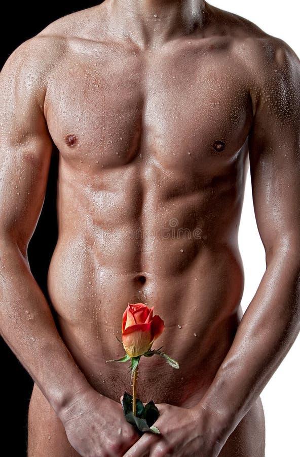 Download роза мышцы человека тела влажная Стоковое Фото - изображение насчитывающей knickers, падения: 18382746