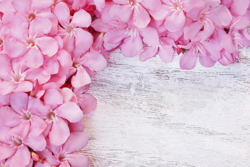 Розовая граница цветка на белой деревянной предпосылке стоковые изображения