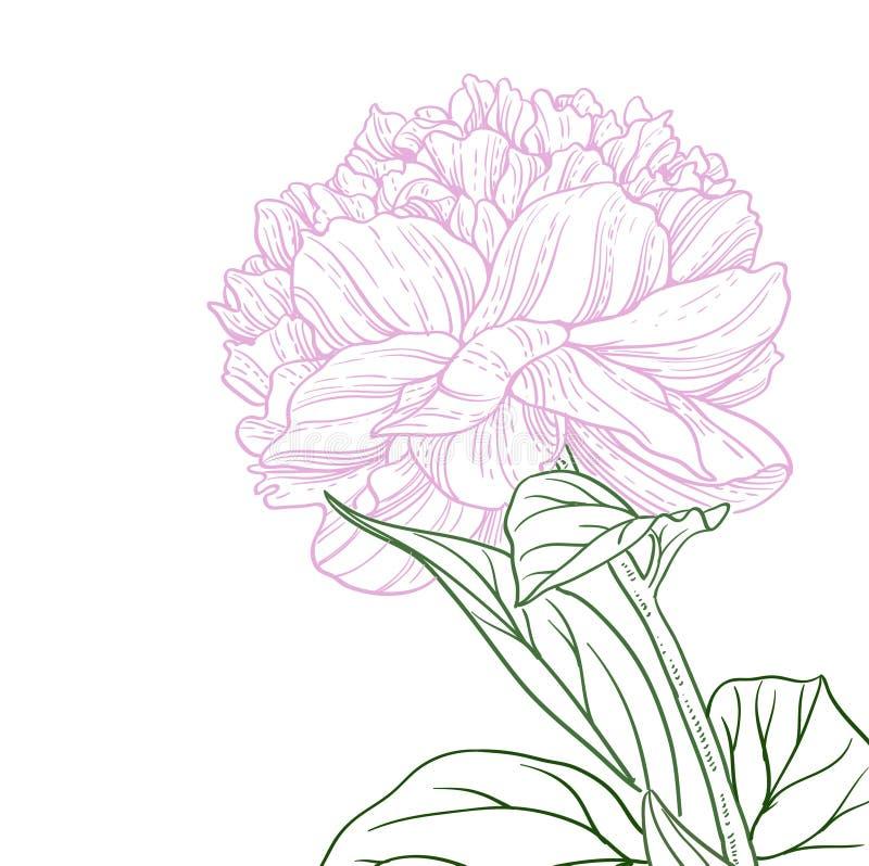 Розовая линия искусство пинка цветка пиона иллюстрация вектора