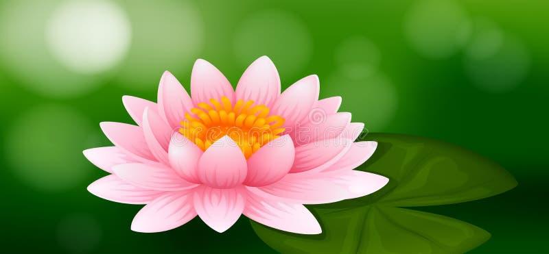 Розовая лилия воды на зеленой предпосылке иллюстрация штока