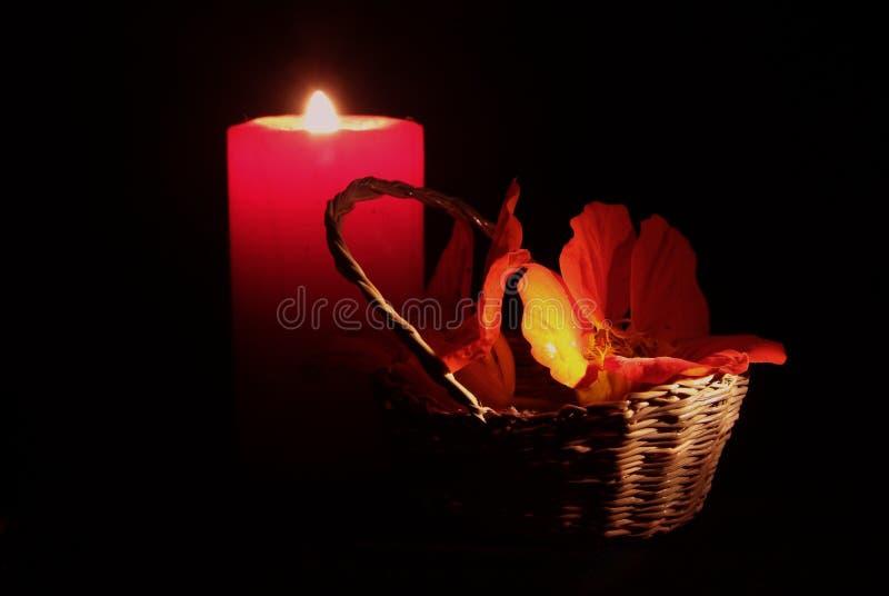 Download Розовая лилия и белизна стоковое изображение. изображение насчитывающей бутика - 81800319