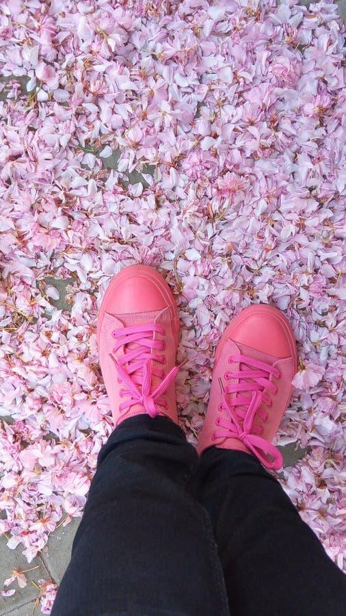 Розовая мода стоковые изображения