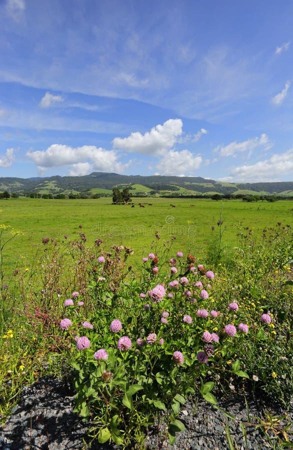 Розовая долина, Kiama Австралия стоковые изображения rf