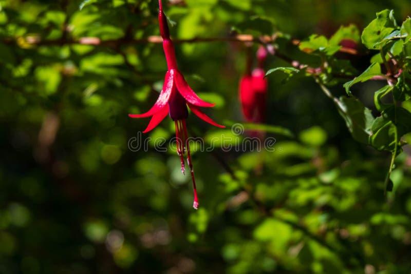 Розовая предпосылка цветка и листьев стоковое изображение