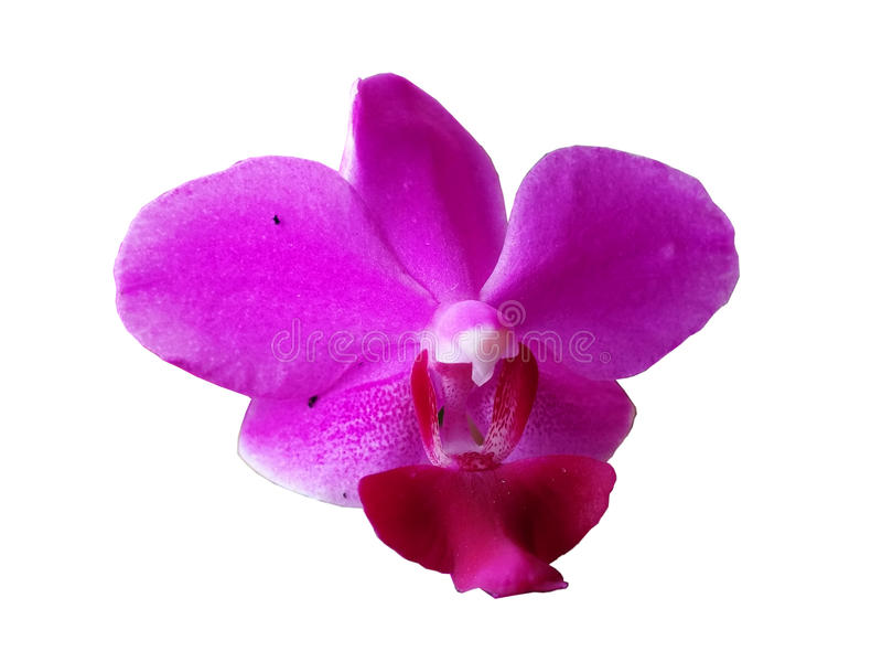 Розовая предпосылка белизны орхидеи стоковые фото
