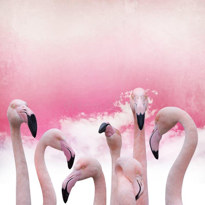 Розовая предпосылка фламинго бесплатная иллюстрация