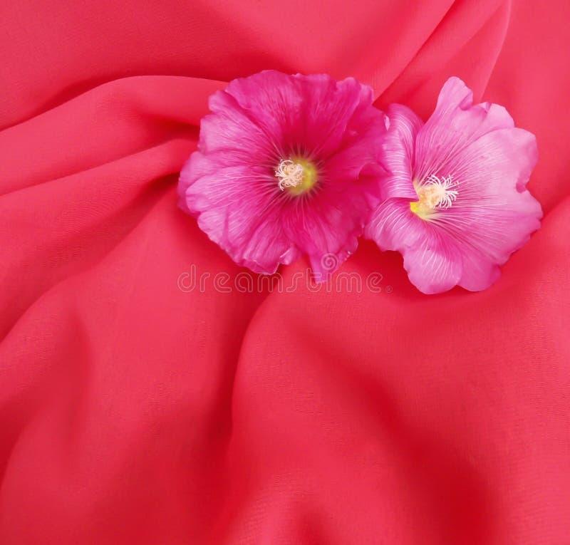 Розовая предпосылка стоковая фотография