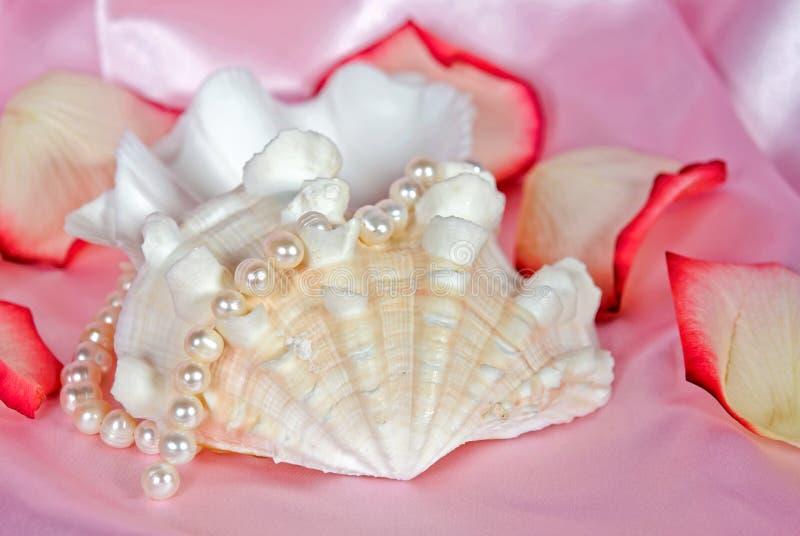 розовая раковина стоковое изображение rf