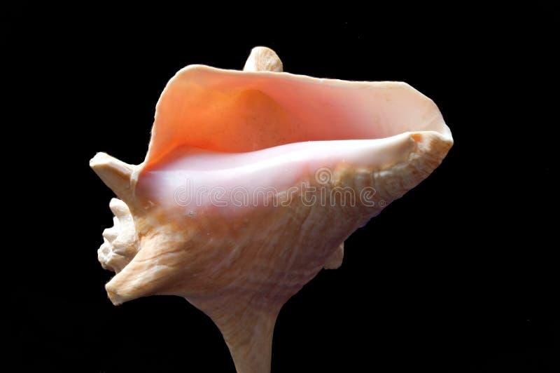 Download розовая раковина стоковое изображение. изображение насчитывающей океан - 77881