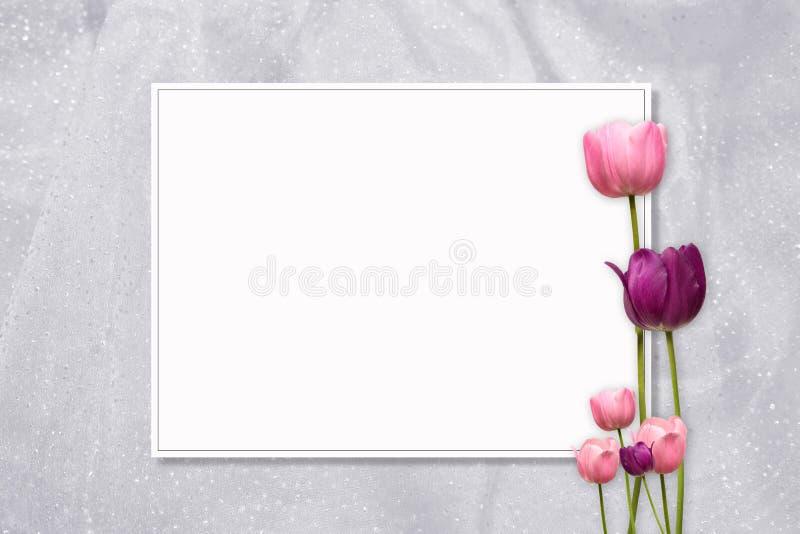 Розовая рамка тюльпана стоковые фото