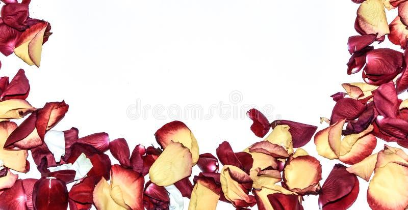 Розовая рамка цветка как романтичная карточка на белой предпосылке стоковые фотографии rf