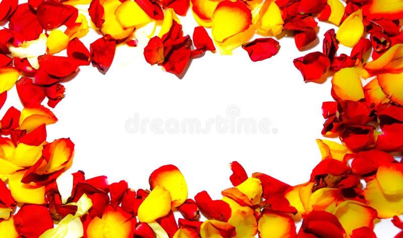 Розовая рамка цветка как романтичная карточка на белой предпосылке стоковая фотография rf