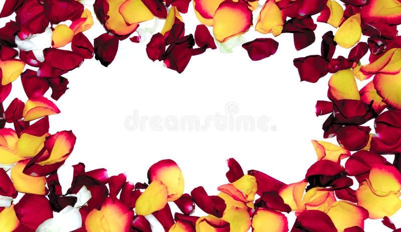 Розовая рамка цветка как романтичная карточка на белой предпосылке стоковая фотография