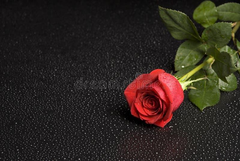 Download розовая серия влажная стоковое изображение. изображение насчитывающей поднял - 1178127