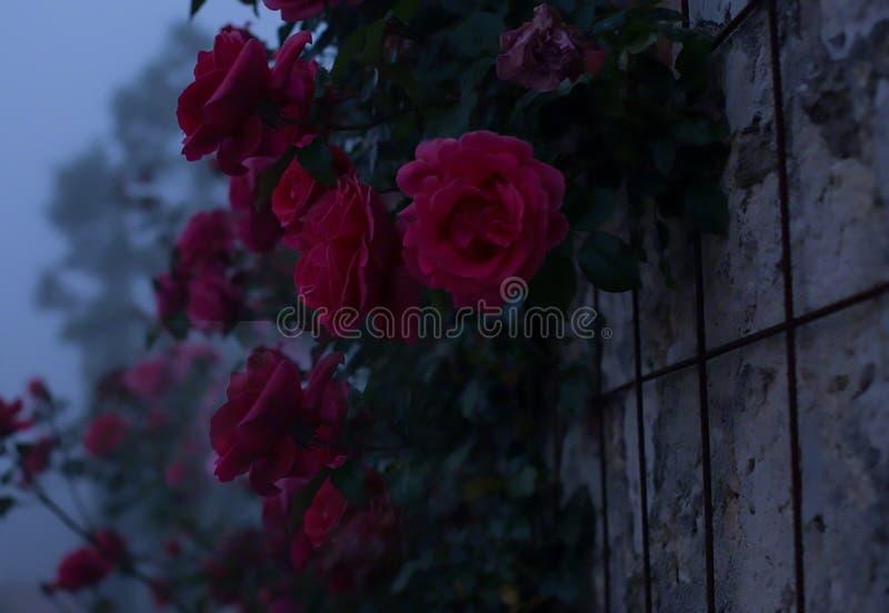 Розовая стена стоковые фото