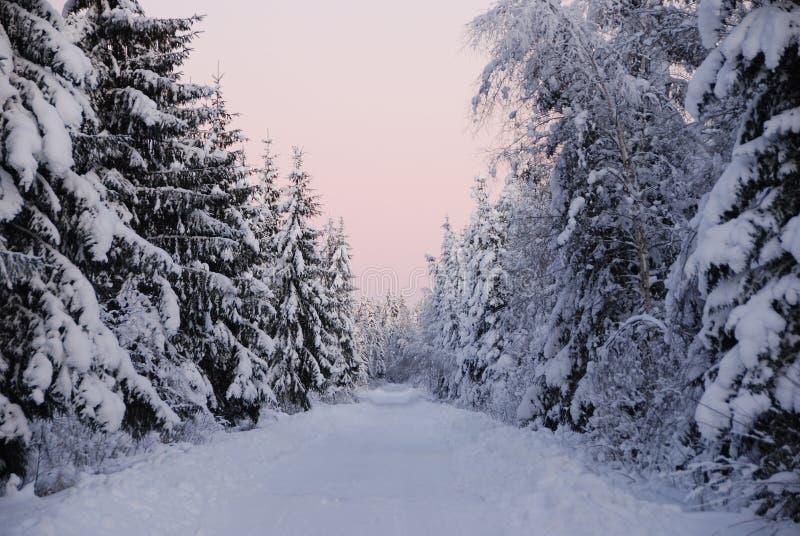 Розовая сцена зимы стоковое фото
