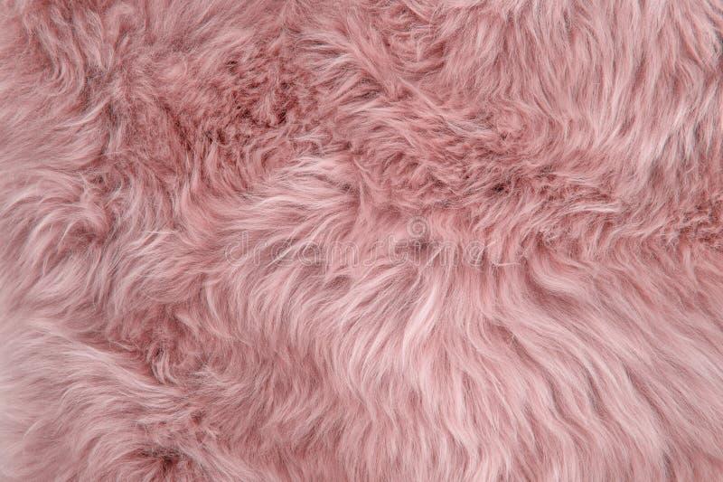 Розовая текстура шерстей меха овец предпосылки половика овчины стоковые изображения
