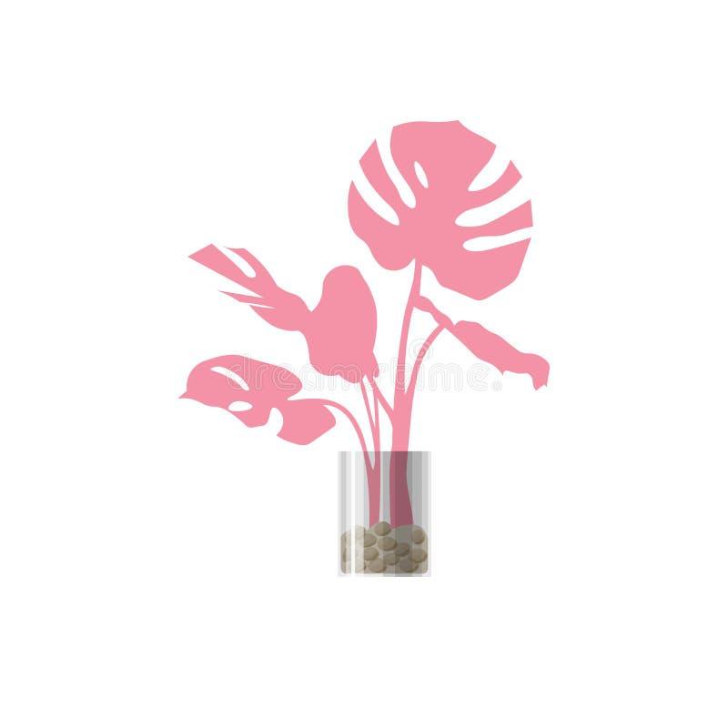 Розовое комнатное растение в баке стоковое фото