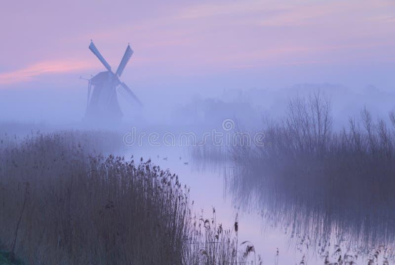 Розовое небо в Голландии стоковые изображения rf