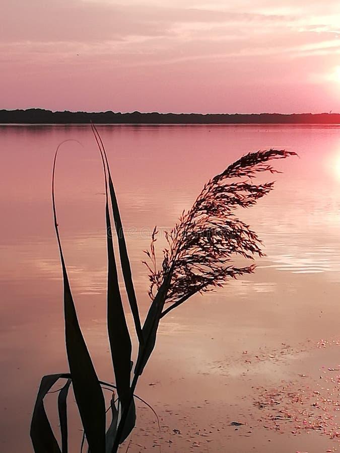 Розовое озеро стоковые фотографии rf