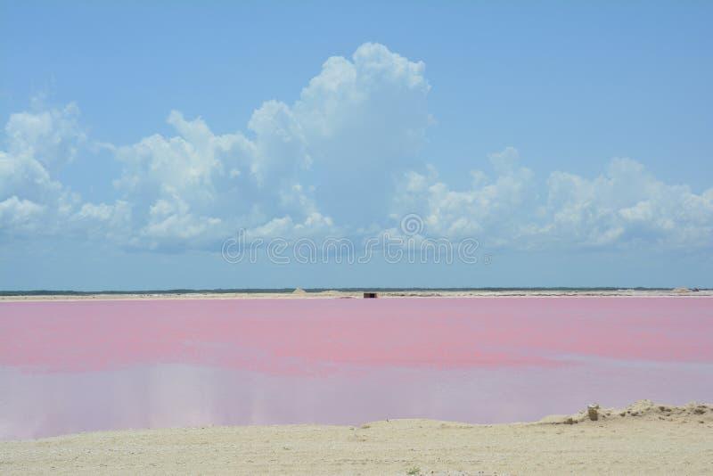Розовое озеро Las Coloradas Юкатан Мексика стоковое фото