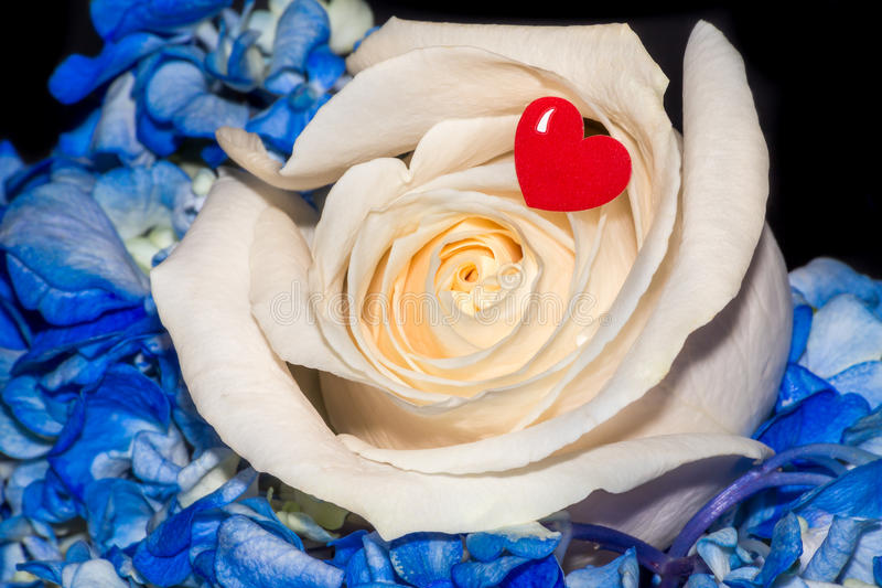 Розовое сердце красного цвета влюбленности цветка стоковая фотография