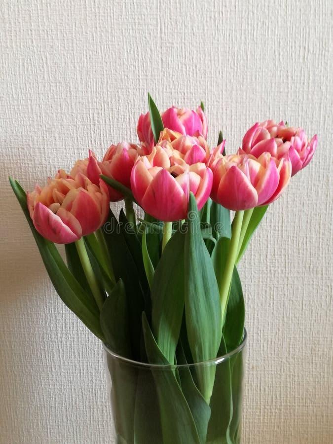Розовое цветение цветка тюльпана стоковое фото