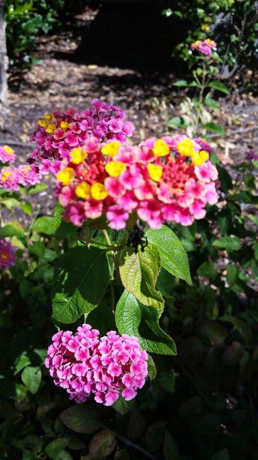 Розовое цветковое растение стоковые фото