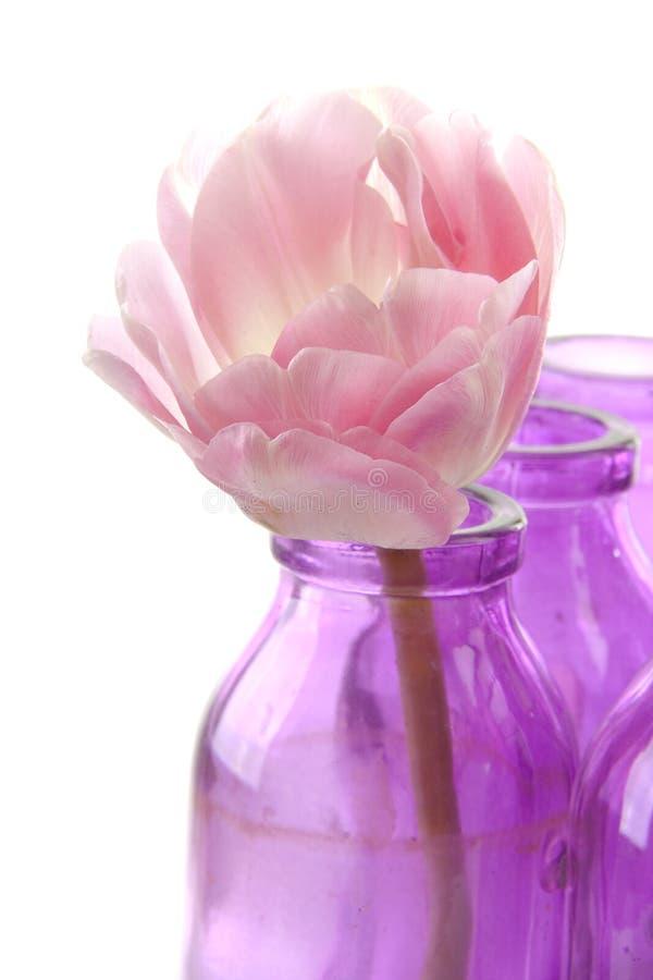 розовые вазы тюльпана стоковые фото