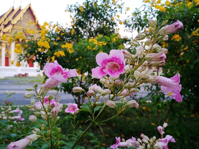 Розовые Гаваи стоковая фотография rf