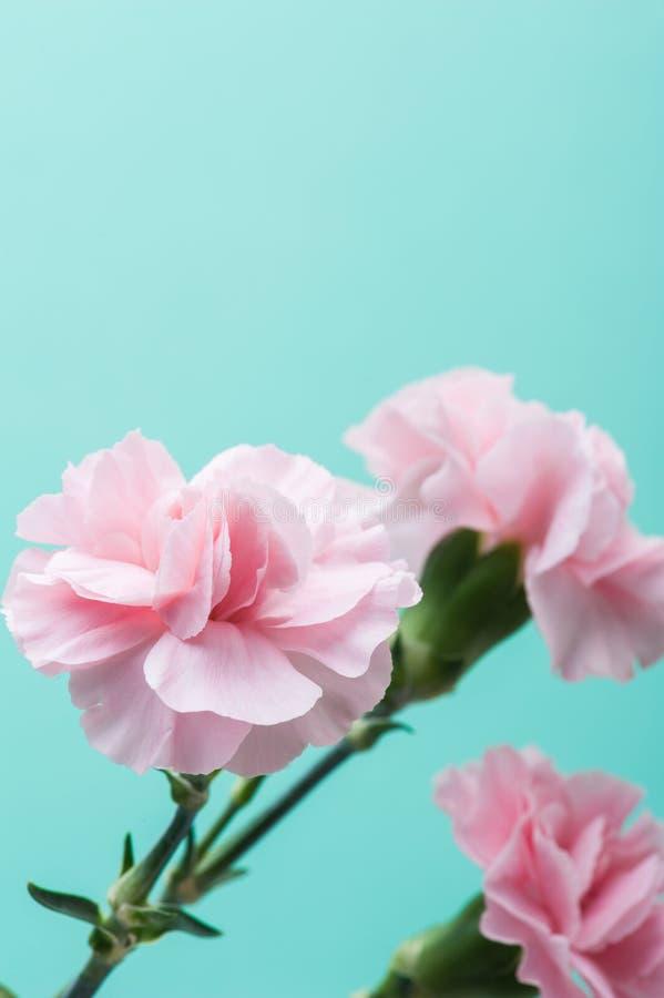 Розовые гвоздики на предпосылке мяты зеленой стоковое фото
