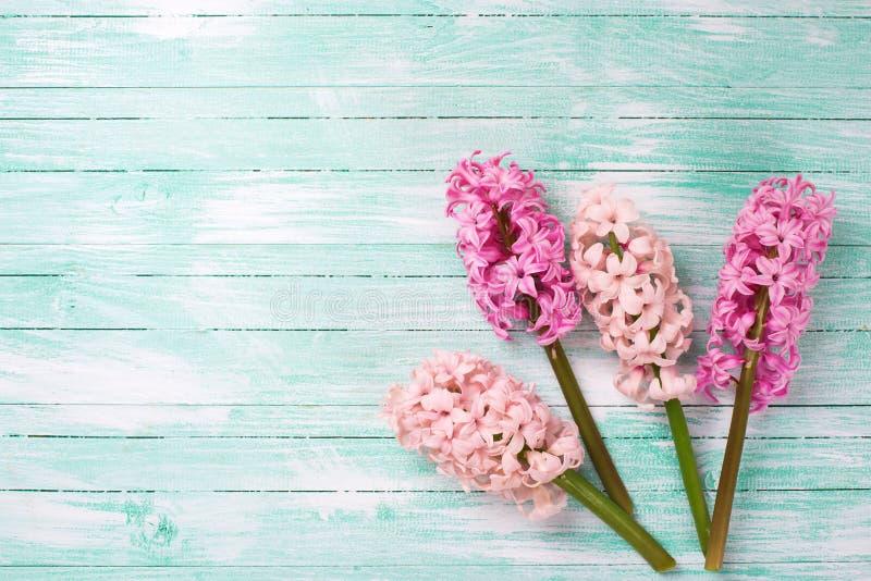 Розовые гиацинты цветут на предпосылке покрашенной бирюзой деревянной стоковые фото