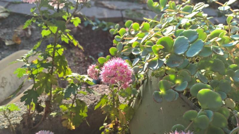 Розовые листья зеленого цвета цветка в centar стоковая фотография