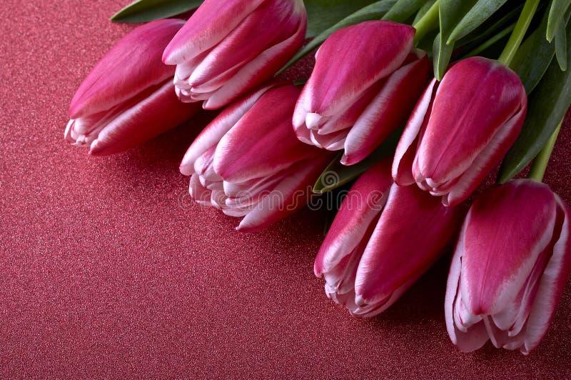 Розовые и белые тюльпаны стоковое изображение