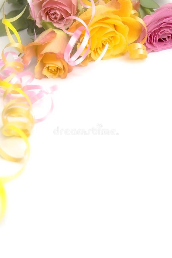 Розовые и желтые розы стоковое изображение