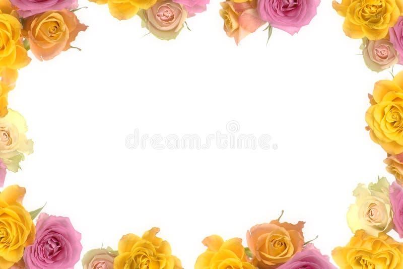 Розовые и желтые розы стоковое изображение rf